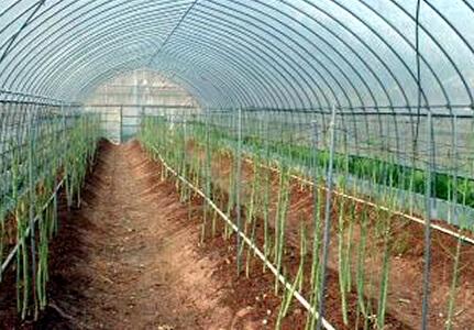 いずみ農園
